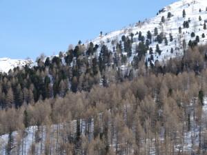 Naturnahe Wälder in der subalpinen Stufe (Lärchenwald und Lärchen- Zirbenwald)