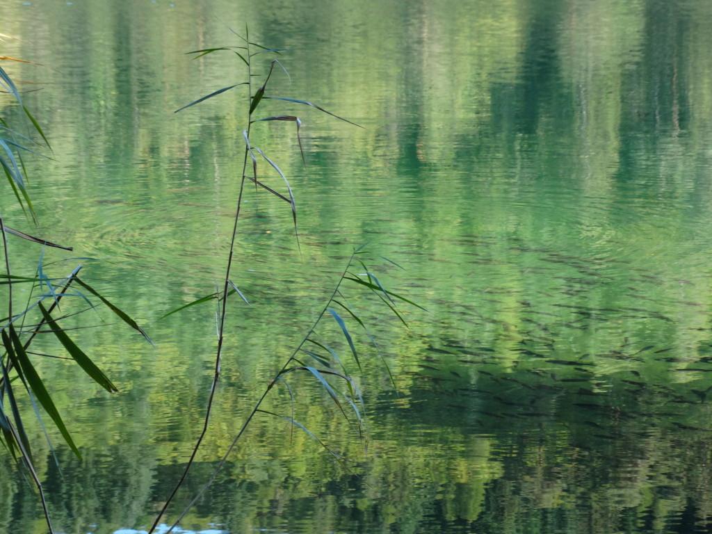 Fischschwarm im Montiggler See