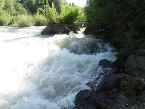 Neophyten (Robinie und Sommerflieder) dominieren Ufer Jahre nach der Revitalisierung