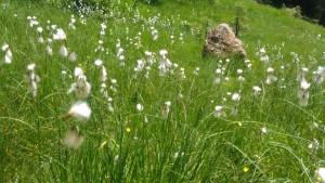 Niedermoor auf kalkreichen Böden