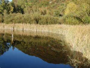 Naturschutzgebiet Kalterer See: die Fischfauna ist stark verändert und Graskarpen schwimmen im See, welche das gesamte Ökosystem gefährden