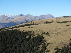 subalpine und alpine Landschaft, natürliche Krummholzzone mit Latschen und Almweiden nebeneinander