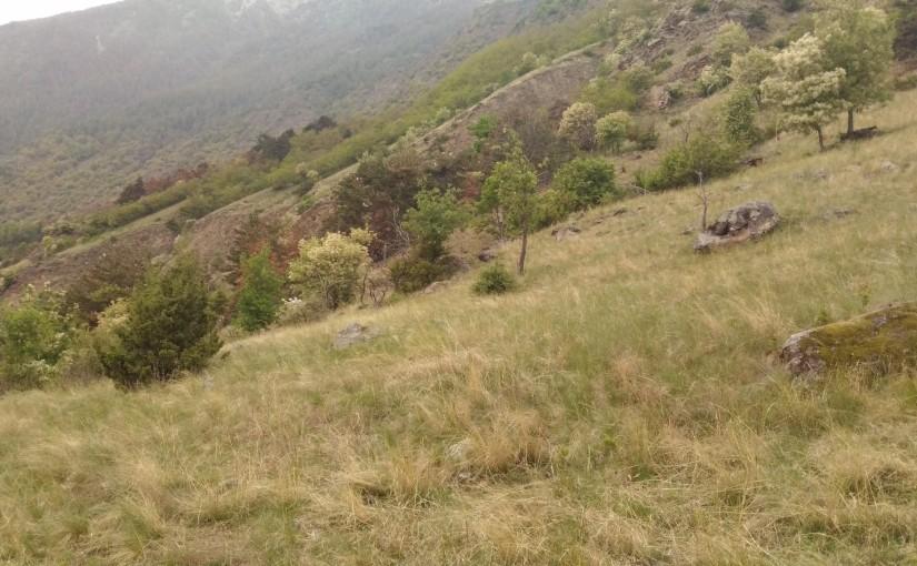 Trocknrasen im Vinschgau