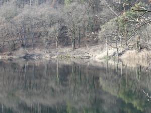 Montiggler See mit natürlichen Ufer rechts und weggebaggerten natürlichen Ufer links als Aufwertung