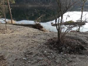 """""""Aufgewertetes"""" weggabggertes natürliches Ufer am Montiggler See"""