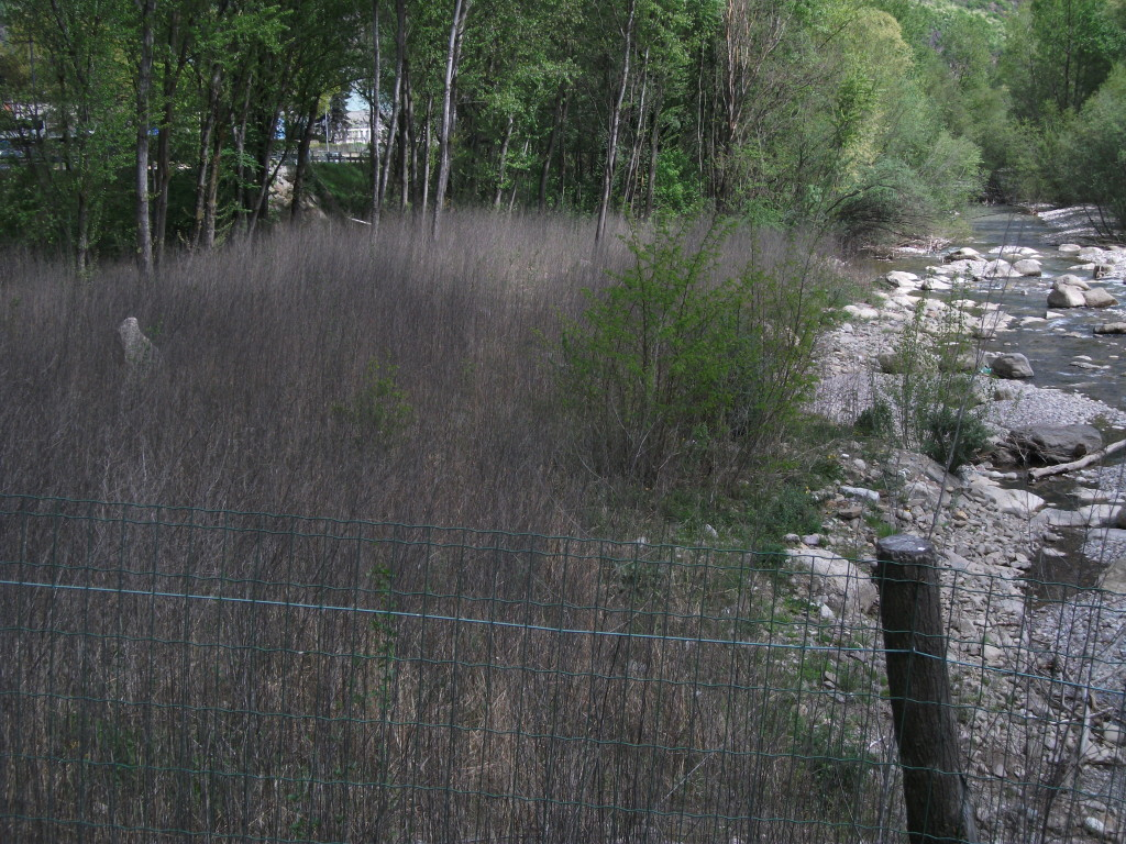 Revitalisierter Auwald im Unterlauf der Falschauer 2015: Unkraut ersetzt