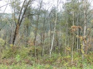 Auwald in der Ilstener Au mit Weiden, Grauerlen und Eschen in der Baumschicht des Waldes