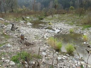 neuer Bachlauf mit gepflanzten Röhricht (Gras) und aufgeworfenen Schotterhäufen