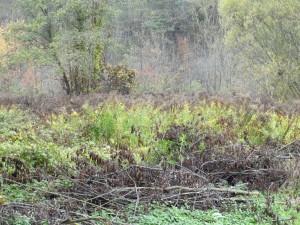 Ökologisch defizitäre Fläche im Biotop mit kanadischer Goldrute wurde nicht aufgewertet