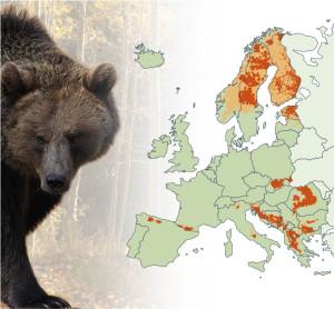 Bär Verbreitung in Europa (Bildquelle: Europäische Kommission)