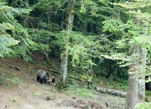 Bärenfamilie (Bildquelle: Europäische Kommission)