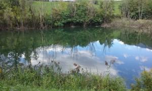 Bild kleiner Teich nachher