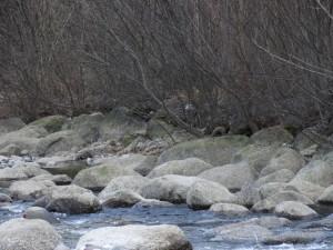 Durch den Einbau großer Steine wird die natürliche Seitenerosion unterbunden, -neue Verbauungen entstehen auf revitalisierten Flächen