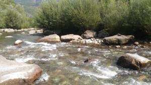 Falschauer mit Fischsteinen zugepflastert