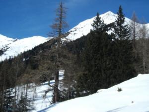 11 subalpiner Fichenwald mit Lärchen