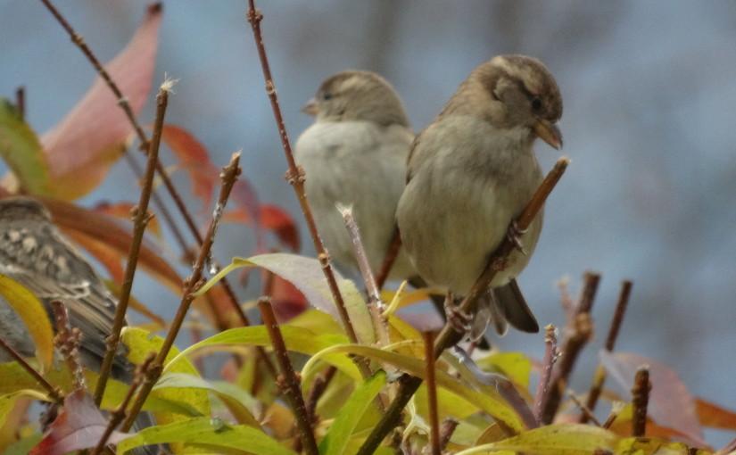 Vögel in Südtirol