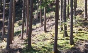 Viele Wälder sind zu Fichtenwäldern umgebaut worden, nach der FFH Richtlinie geschützte Waldgesellschaften sind in einem schlechtem Erhaltungszustand