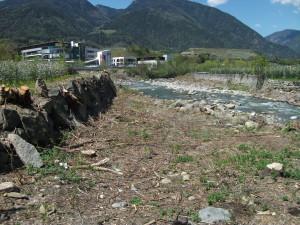 Holzfällerarbeiten am Eisack in Vahrn