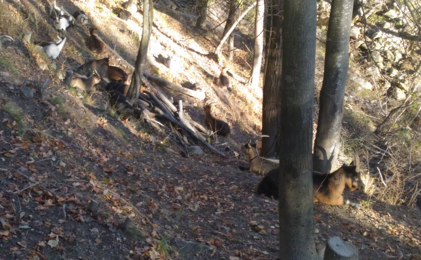 Edellaubwälder
