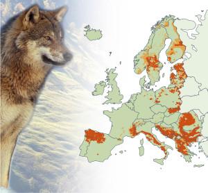 Wolfspopultionen in Europa (Bidquelle: Europäische Kommission)