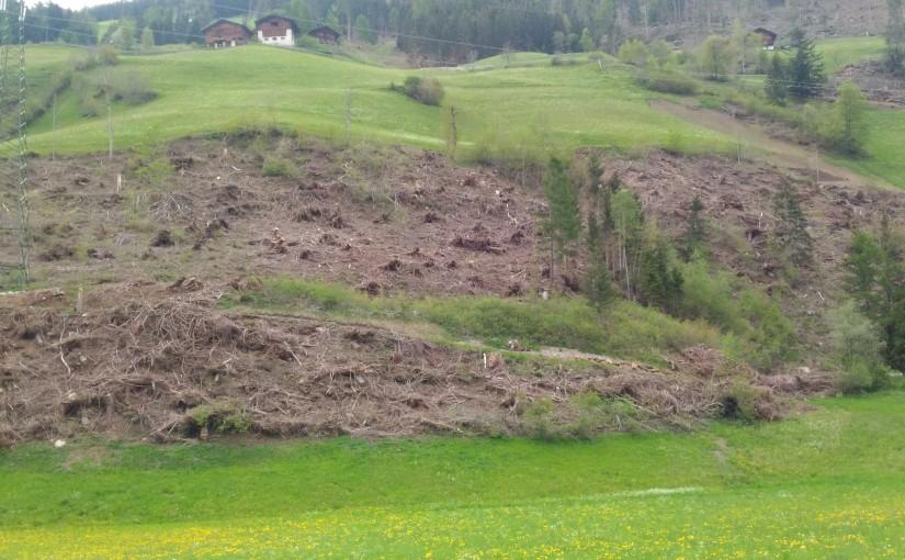 Windwurf Südtirol 2018