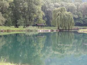 Künstlich angelegter Fischereteich im Natura 2000 Gebiet Falschauer unweit des Schlafbaumes der Kormorane