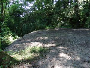 Erdhaufen im geschützten Biotop Burgstaller Au