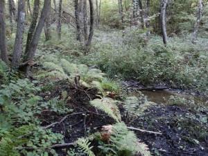 Schwarzerlenbruchwald am Hippolither Bach