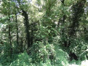 Schwarzerlenwald des geschützten Biotops Burgstaller Au