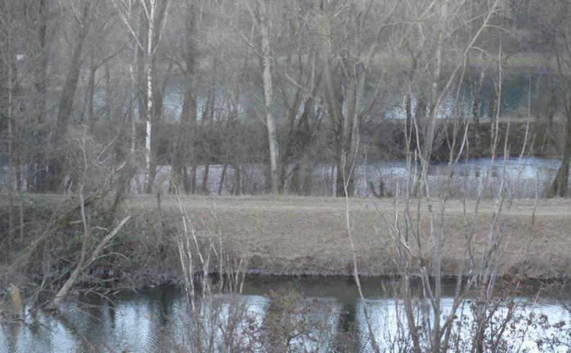 Abgetrennte Auwälder an Flüsse anbinden