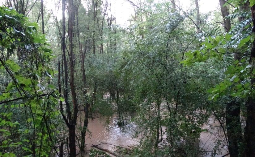 Hochwasser im Auwald