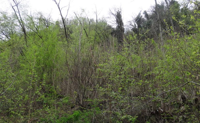 Niederwaldbewirtschaftung